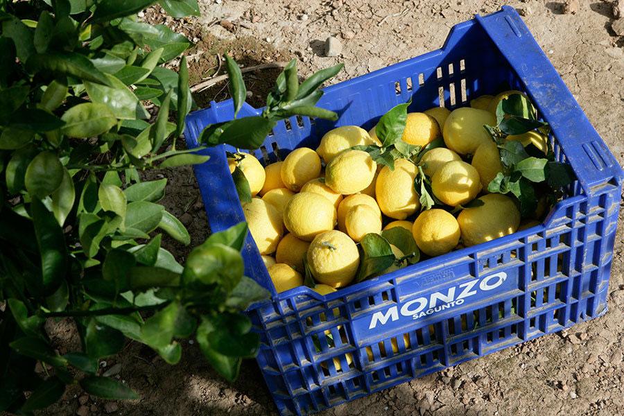 caja de limones de 15 kg.